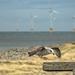 Seagull Landing_1270134