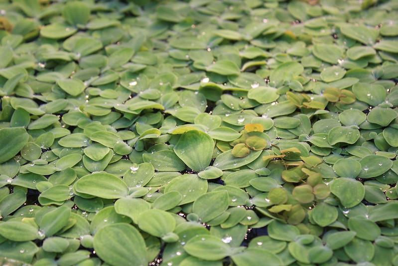 Chlorophyll / etdrysskanel.com