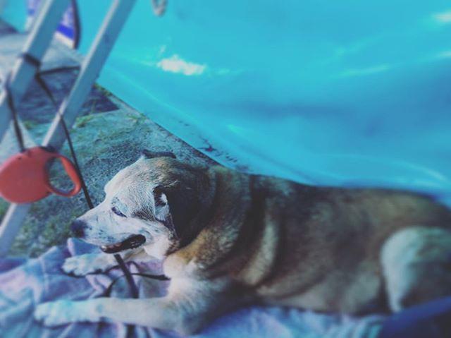 Me and my #meatball at #portcanaveralseafoodfestival #johnnyandme #barkingdogcreationsstudio #olddogsrule #melbourne
