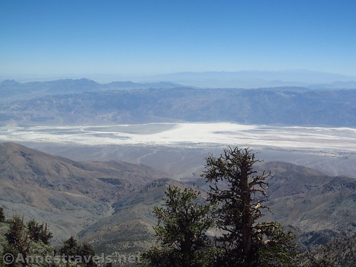 Bristlecone pines and Badwater Basin from the trail up Telescope Peak in Death Valley National Park, California