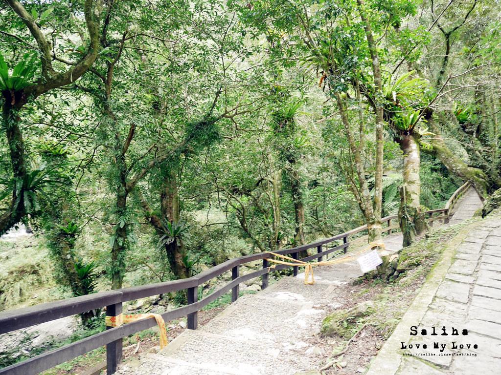 新北三峽一日遊踏青景點推薦滿月圓森林遊樂區 (25)