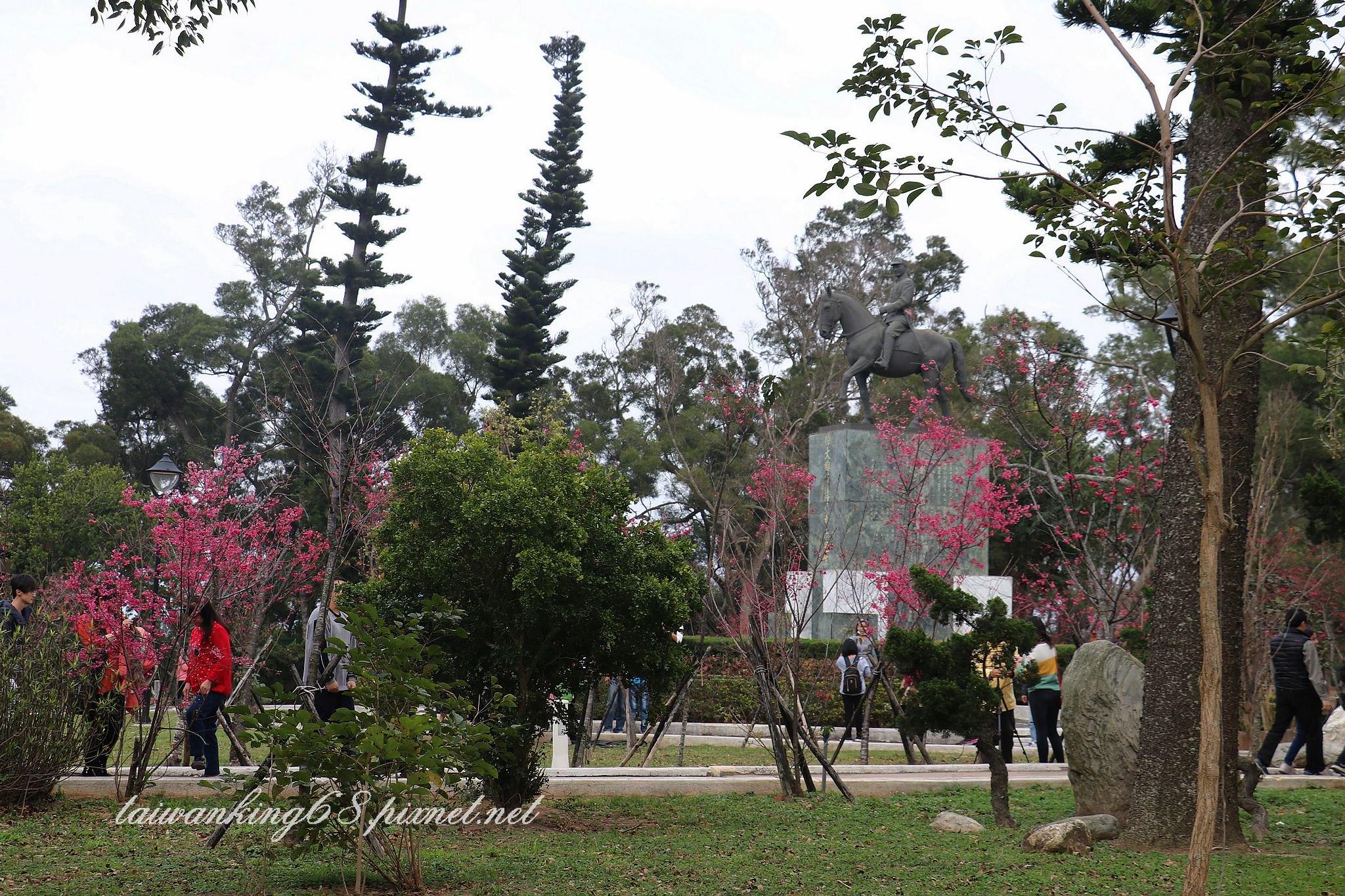 鐵砧山櫻花