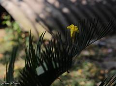 Fallen leaves/ flowers