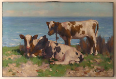 david gauld cows
