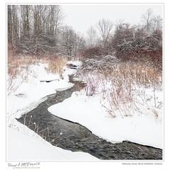 February Snow, Rural Waterloo, Ontario
