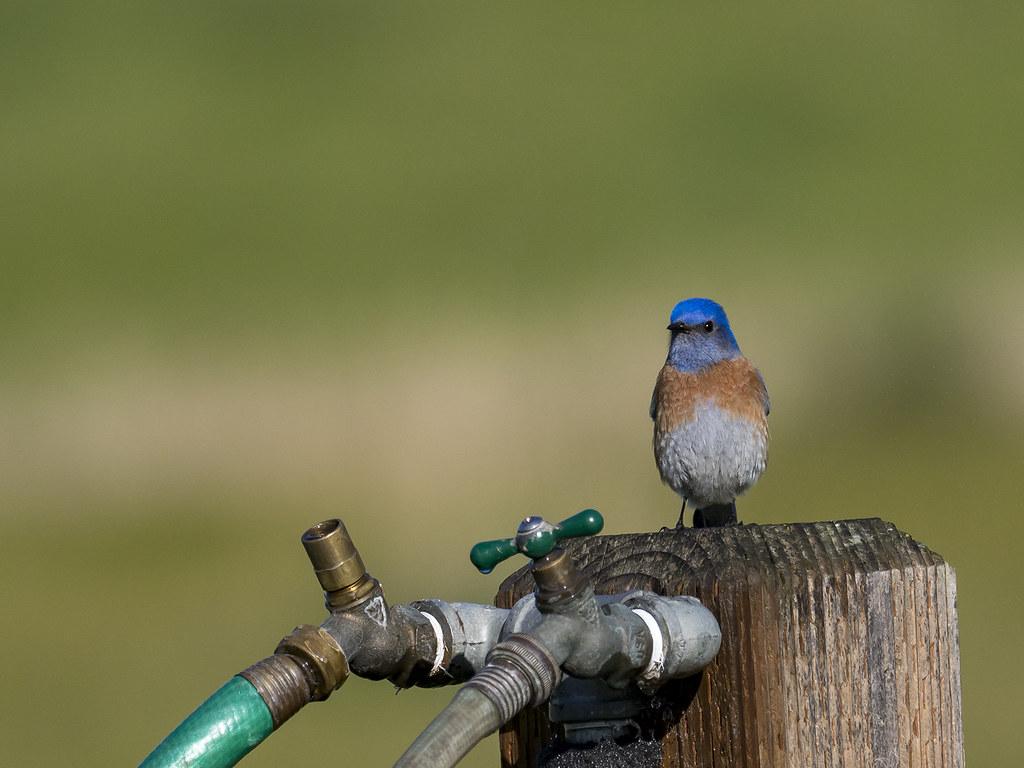 Oiseaux divers [Ajout 2 images 1 mars 2018] 38675418520_50aea50792_b