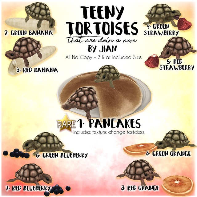 JIAN Teeny Tortoises ( The Arcade March '18)