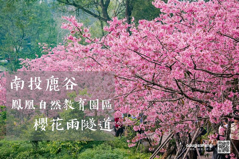 【遊記】南投鹿谷鳳凰自然教育園區賞櫻花 (1)