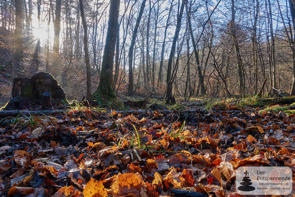 Wandern im Wald bei Kirchheimbolanden