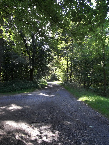 20100824 267 0104 Jakobus Weg Wald