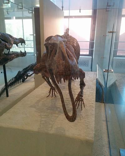 Ancient reptiles (1) #newyorkcity #newyork #manhattan #amnh #fossil #reptiles #americanmuseumofnaturalhistory #latergram