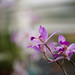 Orchids, RHS Wisley Glasshouse