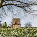 Snowdrops at Babworth Church
