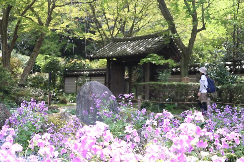 20170415_鎌倉アルプス_0416.jpg