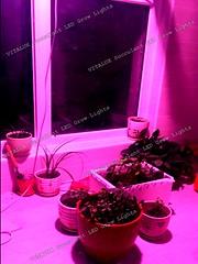 植物燈,led植物燈,led植物生長燈