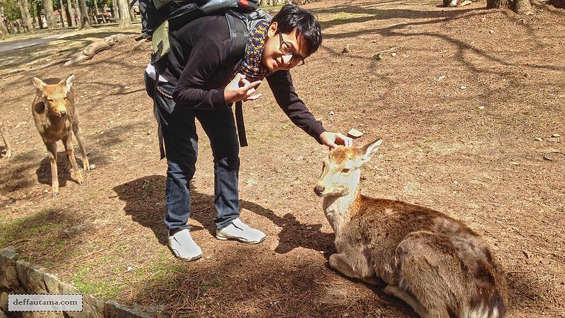 Setengah Hari di Nara - Nara Park Deer