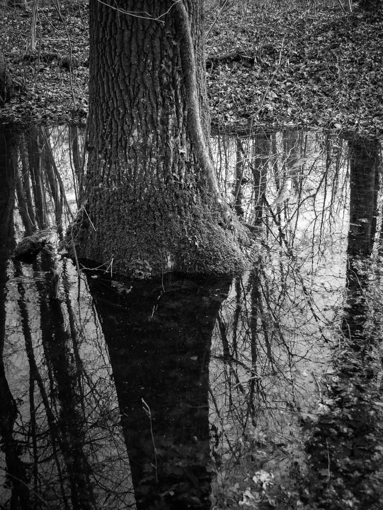 La forêt dans l'eau... 40057698091_e27116f453_b
