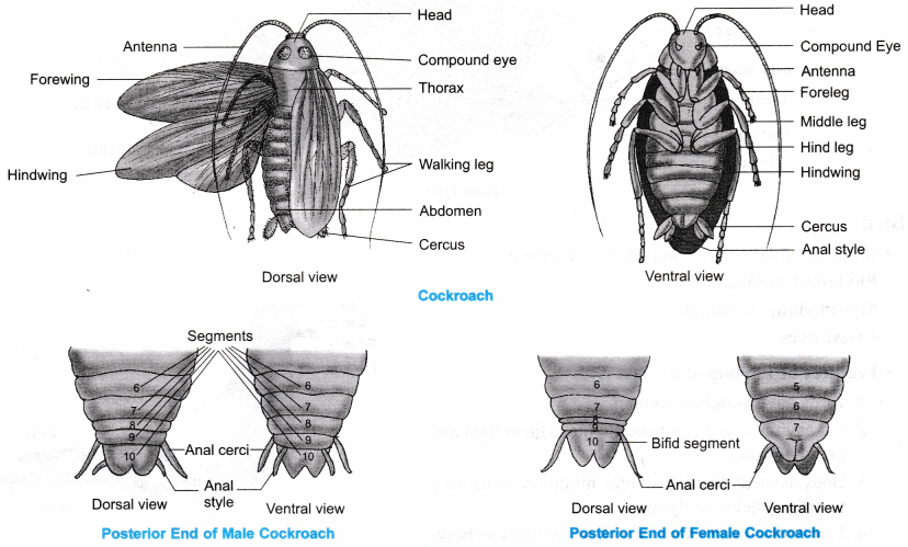 Ncert Class 9 Science Lab Manual - Animal Kingdom