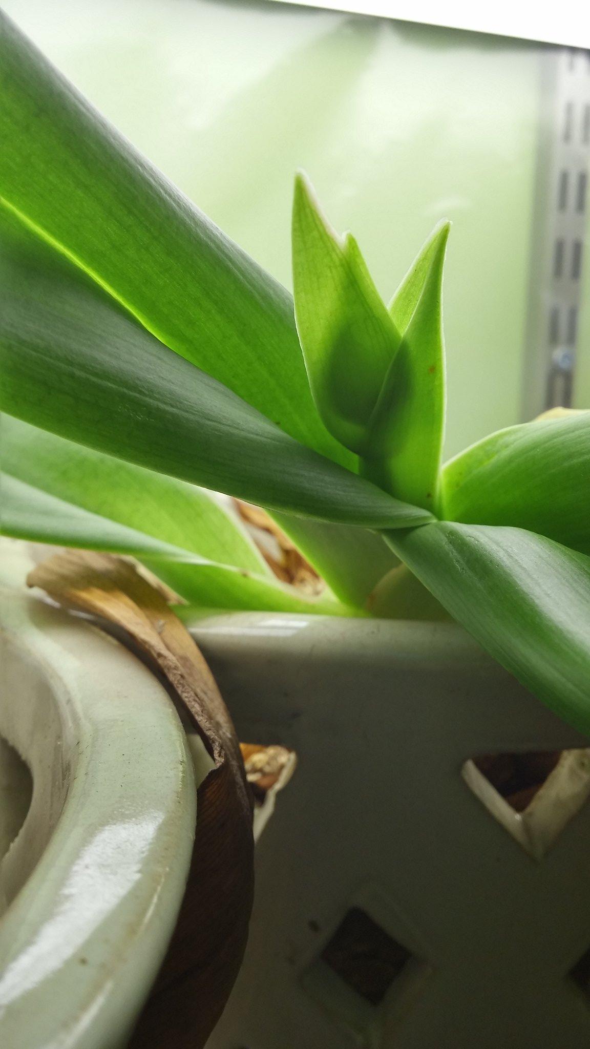 Les orchidées chez Sougriwa - Page 4 40209541872_e2bda4ff67_k
