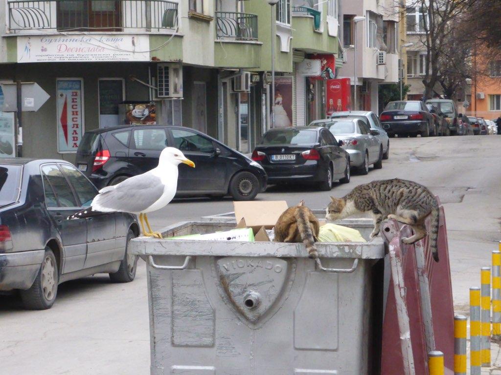 Котэ+чайка