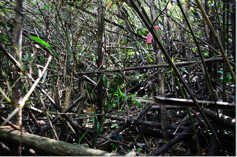 勃子山亂竹林區