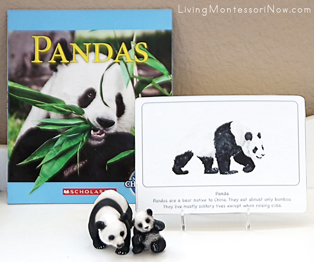 Panda Culture Card on Shelf with Pandas Book and Schleich Pandas