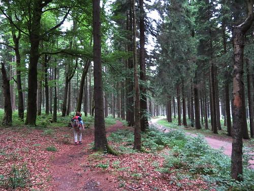 20170605 07 185 Regia Wald Weg Pilger ElisabethB