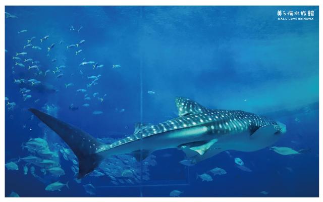 沖繩美麗海水族館-36