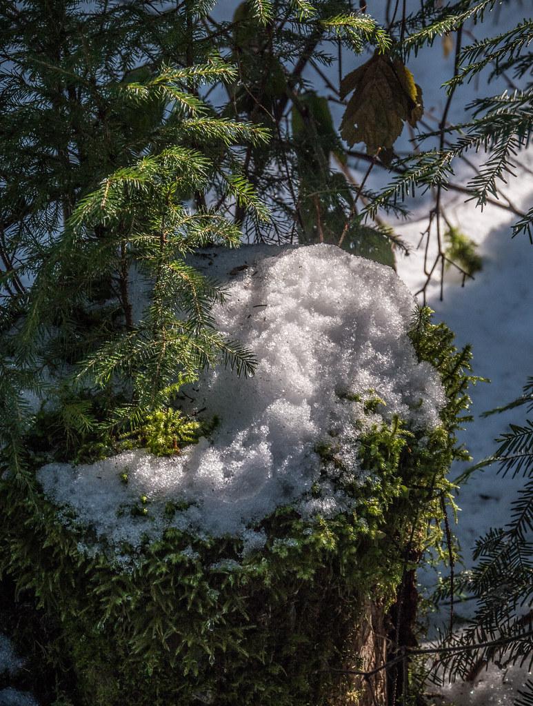 Promenade dans la neige 25777037807_7e986fbef4_b