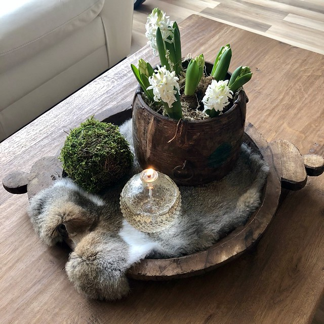 Hyacinten olijfbak vachtje