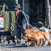 2018 - Mexico City - Walking the Dogs por Ted's photos - For Me & You