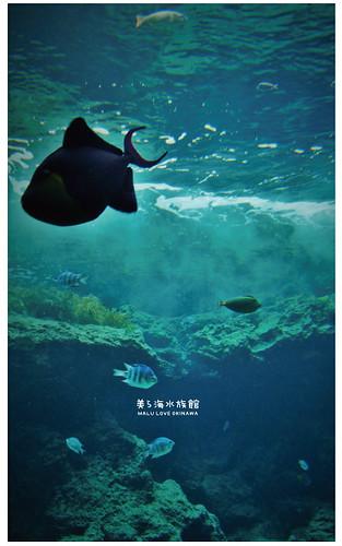 沖繩美麗海水族館-13