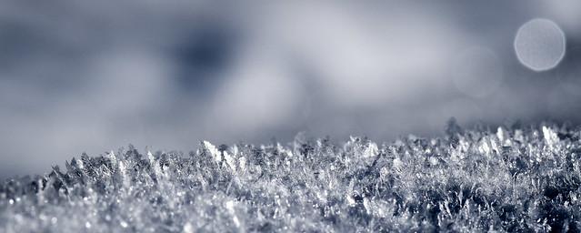 L'or blanc revisité !, Nikon D5500, AF-S VR Micro-Nikkor 105mm f/2.8G IF-ED