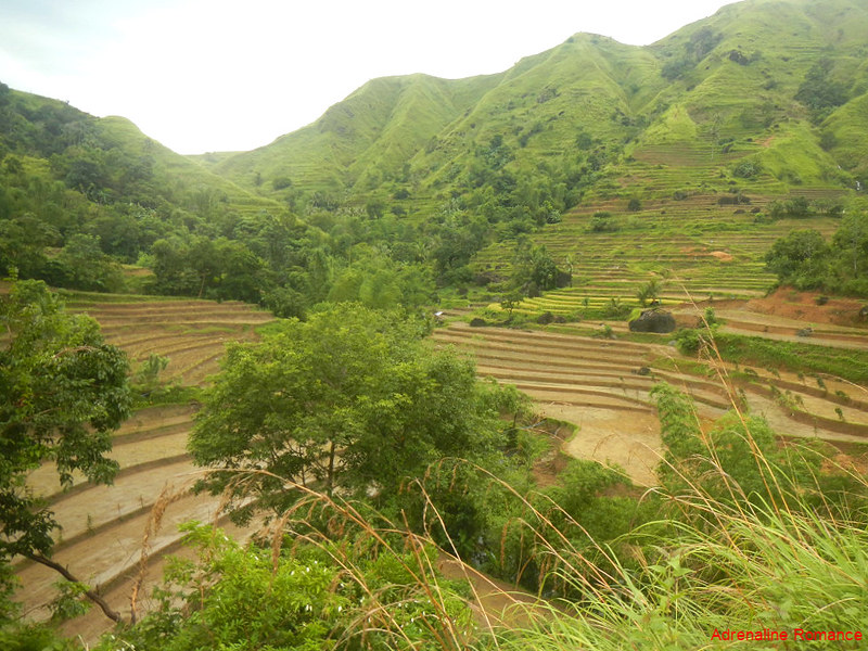 Valderama Rice Terraces