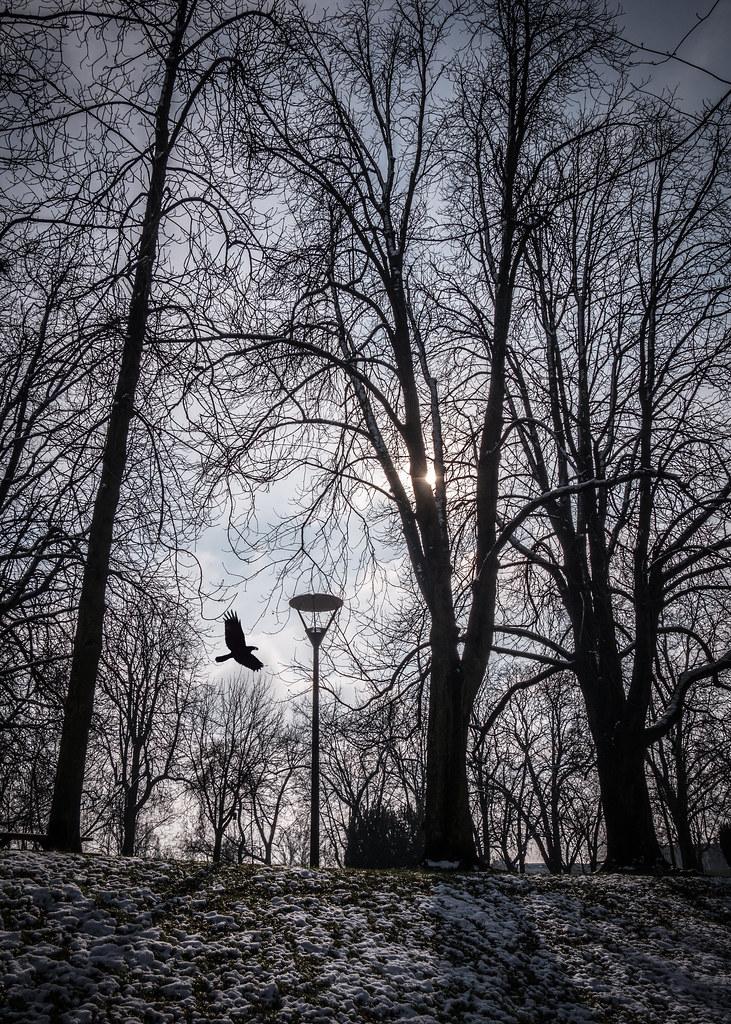 Lumières d'hiver... 39408506194_bcdd747cae_b