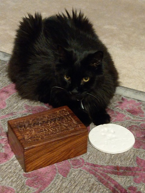 Jasper's ashes came home on January 22, 2018.