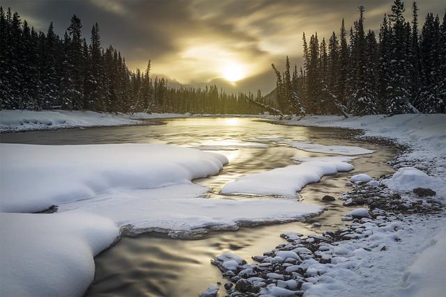 Golden Winter Embrace