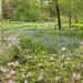 Chanticleer Estate & Gardens (410) by Framemaker 2014