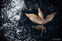 Tri-Leaf On Ice