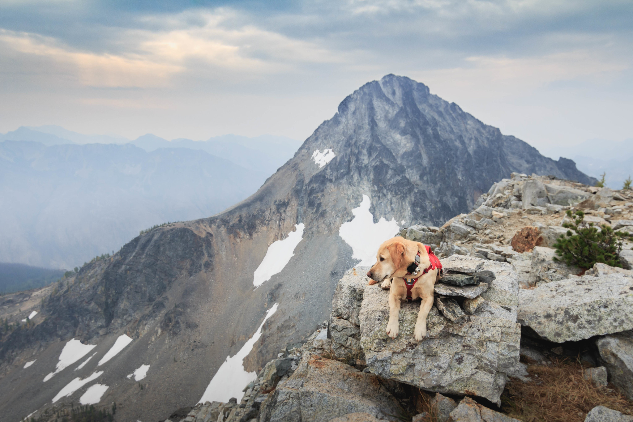 Summit dogs on North Spectacle Butte