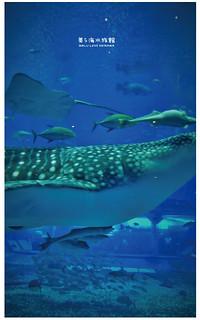 沖繩美麗海水族館-24