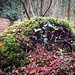 Upturned Tree in the Woods