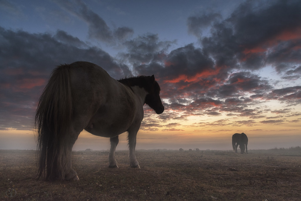 Pony at sunrise...