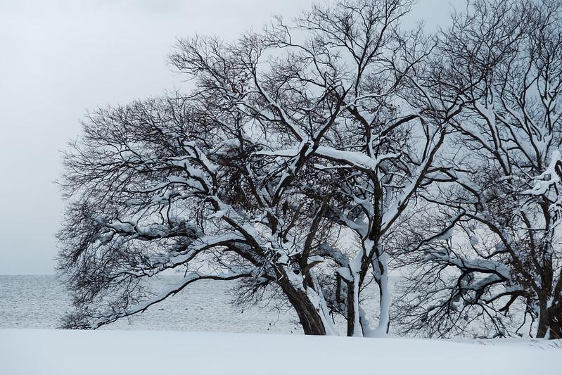 Lake Biwa , winter