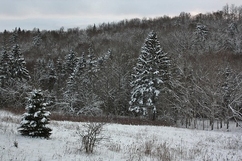 ladyfane pei canada woods forest winter snow trees