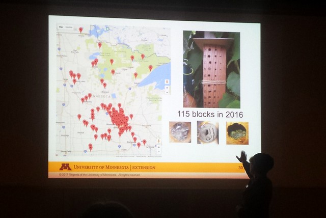a woman in a dark room pointing to a bright powerpoint with a Google map with lots of red pins over Minnesota, and four pictures of bee blocks