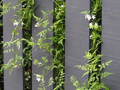 Growth Between the Gate