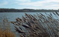 Vento sul fiume Serchio