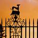Greyhound sunset by tina negus