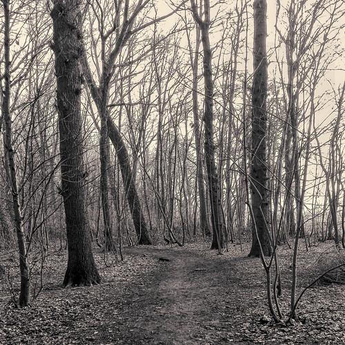 In het bos -1-